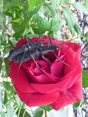 Wissen schafft wissen schreckenblog das forschertagebuch der schreckenpaten - Pfeffer zimmerpflanze ...